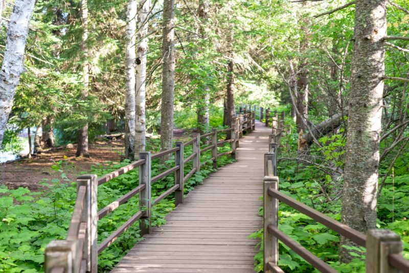 Wooden accessible walkway through forest at gooseberry falls state park in Minnesota